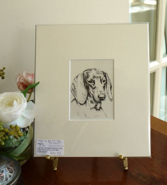Smooth Haired Dachs - Dax O3 - head  1960's print by Bridget Olerenshaw